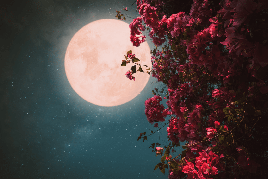 circulo de mujeres luna llena online